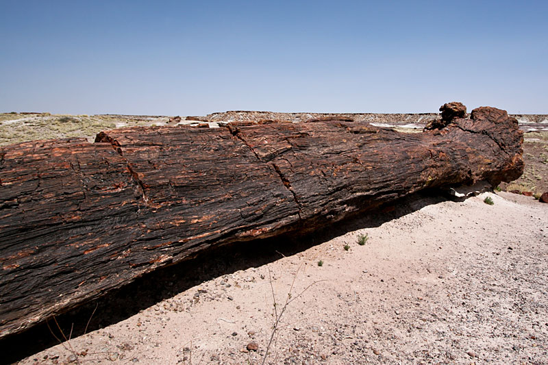 Petrified Forest National Park - Copyright © hanz meulenbroeks
